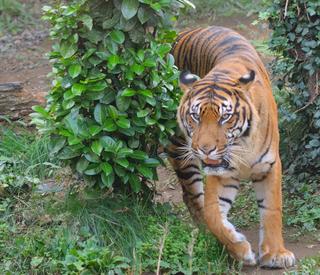 Zoo1_12