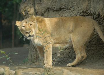 Zoo1_16