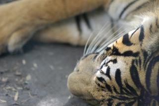 Zoo2_6