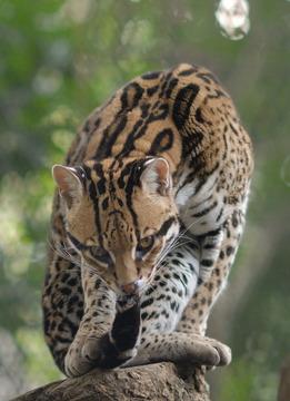 Zoo3_18