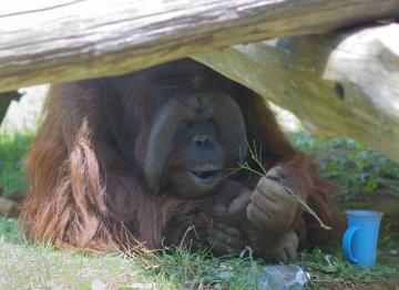 Zoo4_12