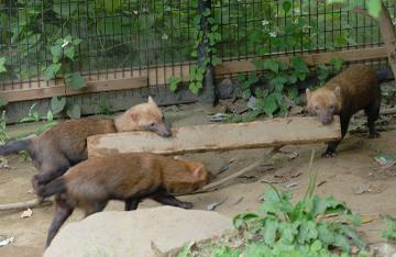 Zoo4_16