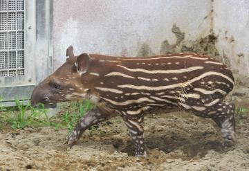 Zoo4_18